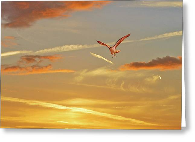 Golden Flight Greeting Card by Adele Moscaritolo