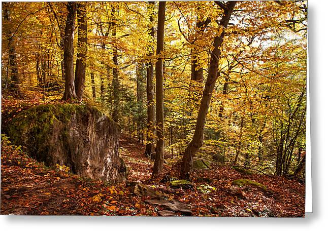 Golden Glimpses Of Autumn Greeting Card