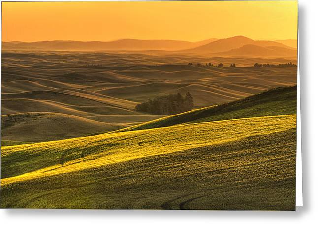Golden Grains Greeting Card by Mark Kiver