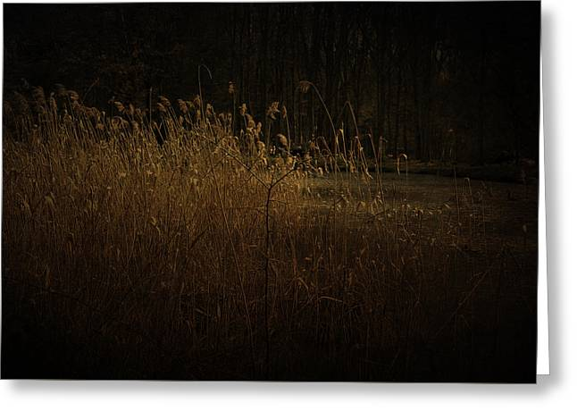 Greeting Card featuring the photograph Golden Grass by Ryan Photography