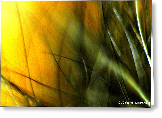 Golden Green Field Greeting Card by JCYoung MacroXscape