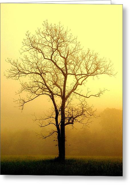 Golden Haze Greeting Card by Marty Koch