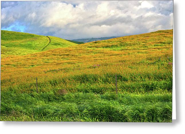 Golden Hills Of California Greeting Card by Lynn Bauer