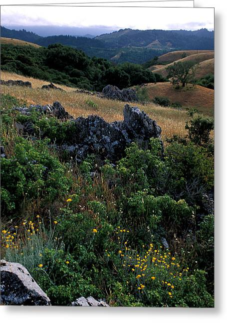 Landscape Framed Prints Greeting Cards - Golden Hills of Summer Greeting Card by Kathy Yates