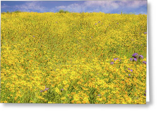 Greeting Card featuring the photograph Golden Hillside by Marc Crumpler