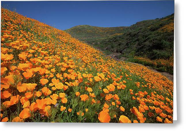 Greeting Card featuring the photograph Golden Hillsides by Cliff Wassmann