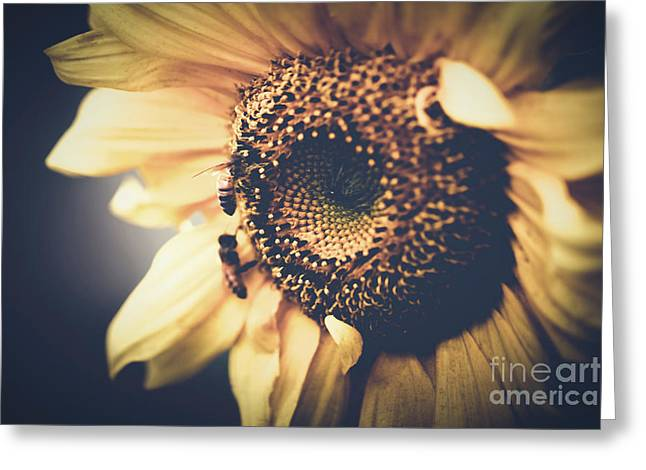 Golden Honey Bees And Sunflower Greeting Card by Sharon Mau