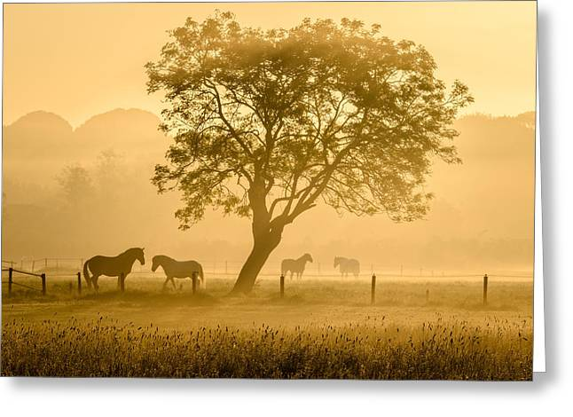 Golden Horses Greeting Card by Richard Guijt