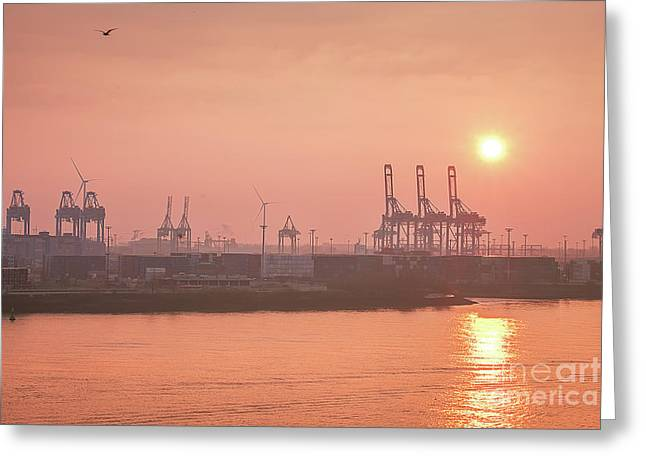 Golden Hour On The Elbe Greeting Card