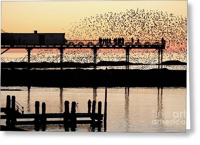 Golden Hour Starlings In Aberystwyth Greeting Card