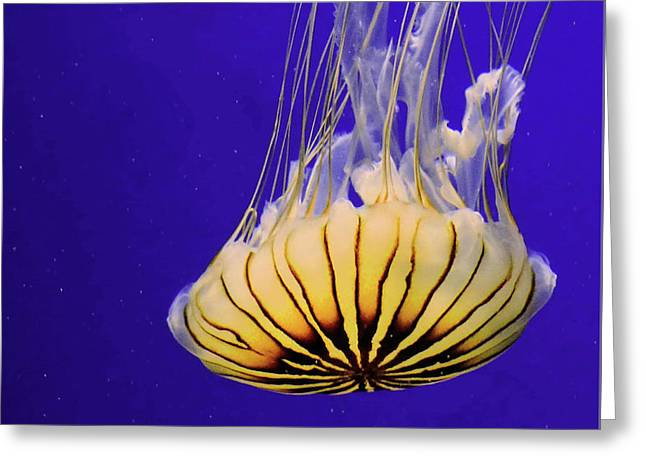 Golden Jellyfish Greeting Card
