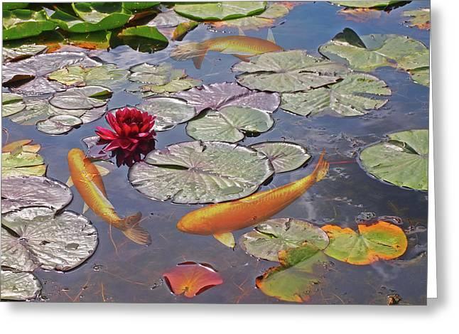 Golden Koi Pond Greeting Card by Gill Billington
