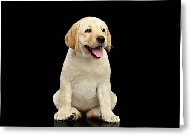 Golden Labrador Retriever Puppy Isolated On Black Background Greeting Card