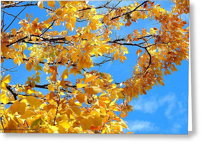 Golden Leaves Ll Greeting Card