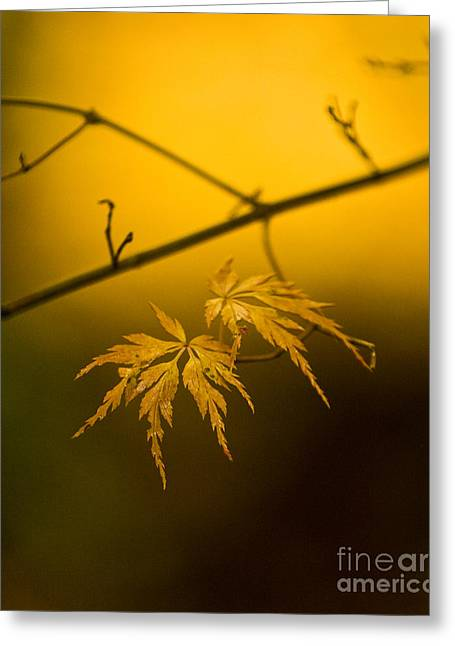 Golden Leaves Greeting Card by Mike Reid