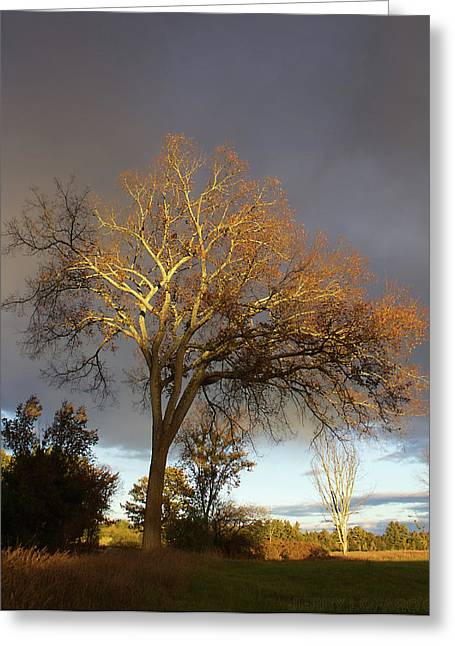 Golden Light Greeting Card by Jerry LoFaro