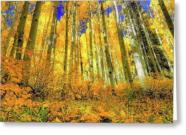 Golden Light Of The Aspens - Colorful Colorado - Aspen Trees Greeting Card by Jason Politte