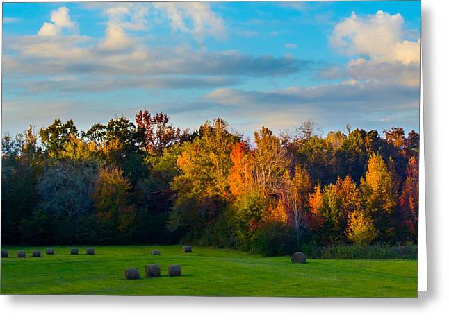 Golden Light On Golden Trees Greeting Card by Parker Cunningham