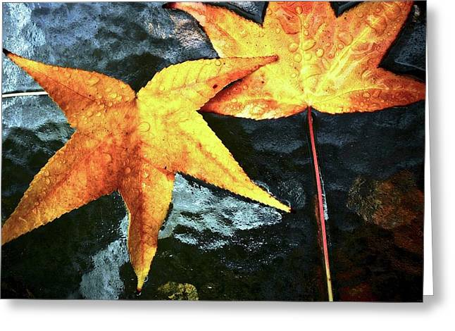 Golden Liquidambar Leaves Greeting Card