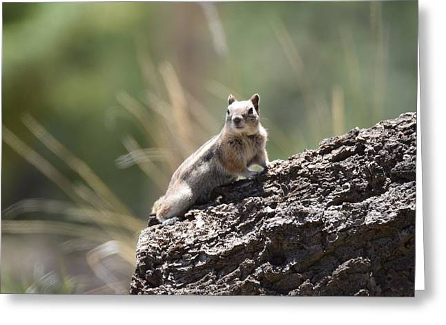 Greeting Card featuring the photograph Golden Mantled Ground Squirrel by Margarethe Binkley
