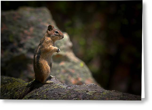 Golden Mantled Ground Squirrel Rocky Mountains Colorado Greeting Card by Christine Till