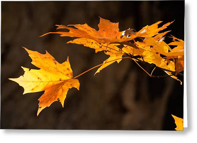 Golden Maple Arch Greeting Card