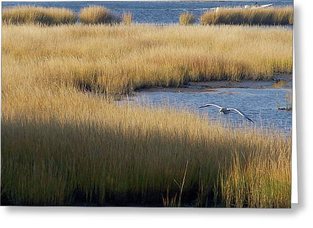 Golden Marsh Grass Against Deep Blue Water With Seagull Greeting Card