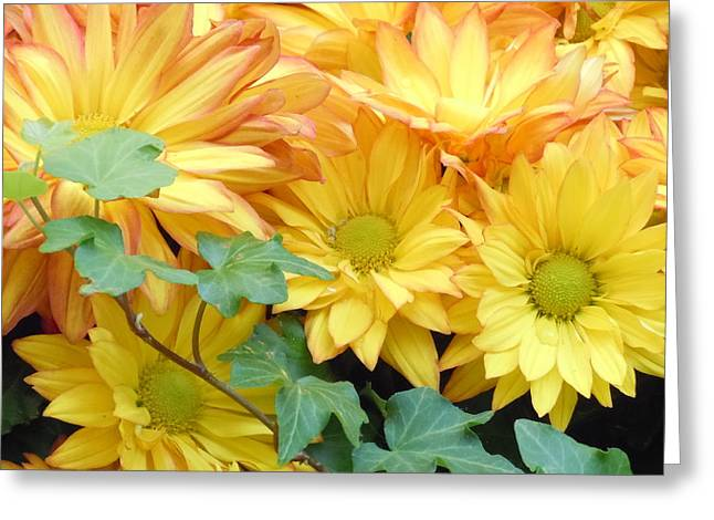 Golden Mums And Ivy Greeting Card