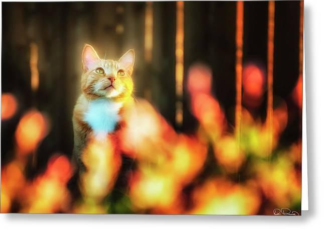 Golden Orange Tabby Greeting Card
