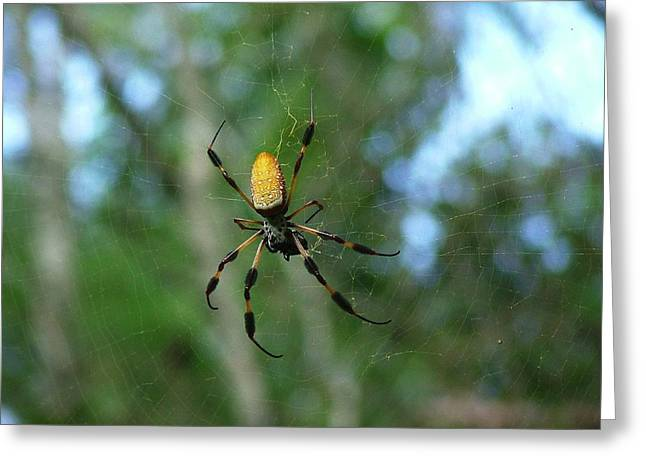 Golden Orb Weaver 1 Greeting Card