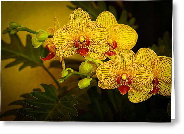 Golden Orchids Greeting Card
