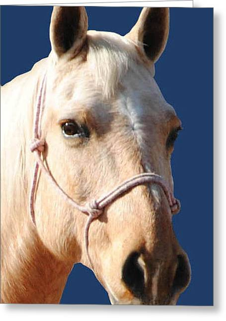 Golden Palomino  Greeting Card