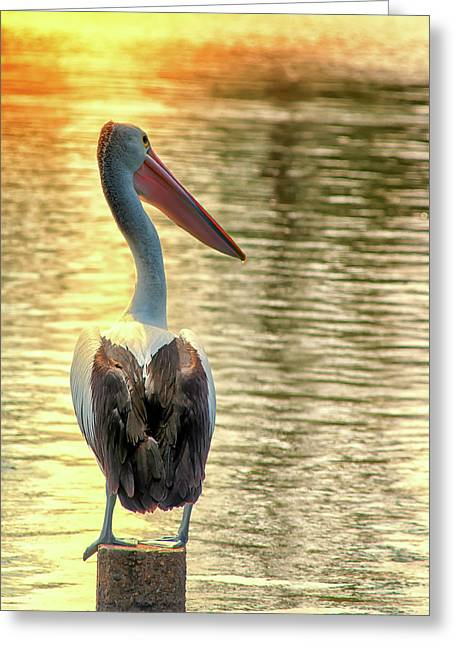 Golden Pelican Greeting Card