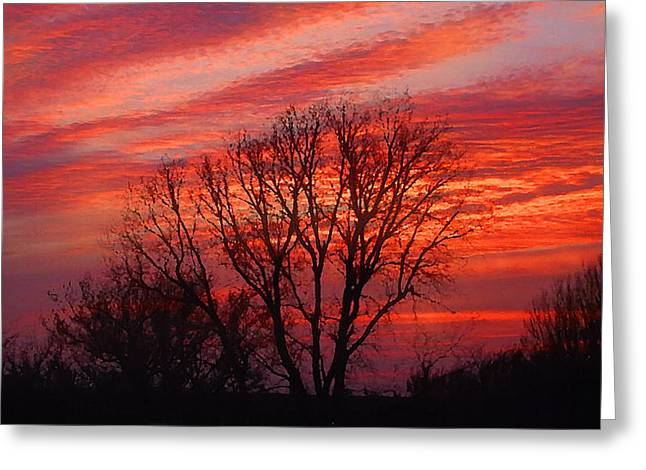 Golden Pink Sunset With Trees Greeting Card