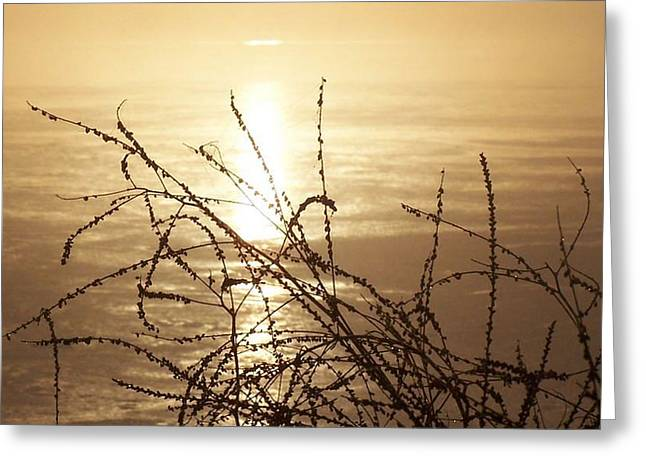 Golden Pond Greeting Card by Laurie Prentice