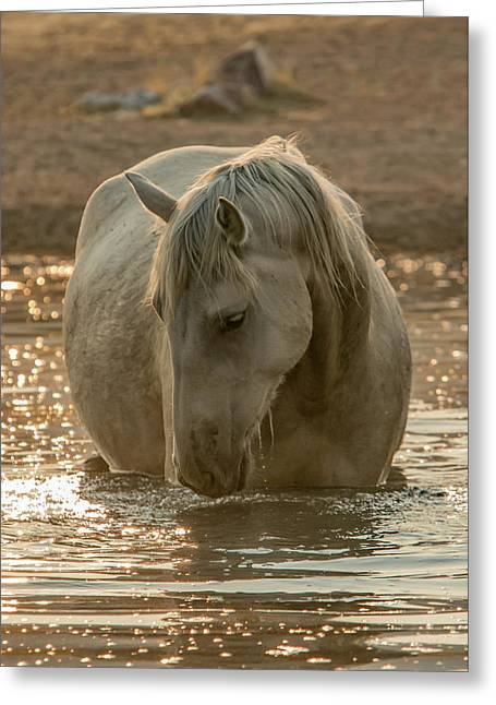Golden Pond Mare Greeting Card