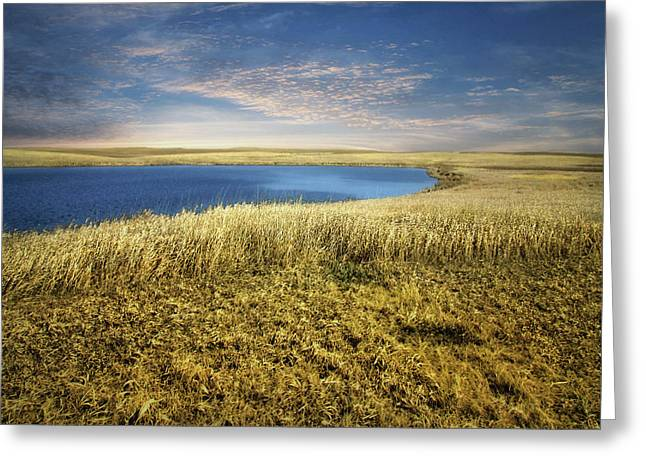 Golden Prairie Greeting Card