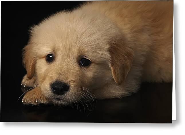 Golden Puppy Greeting Card by Hernan Bua