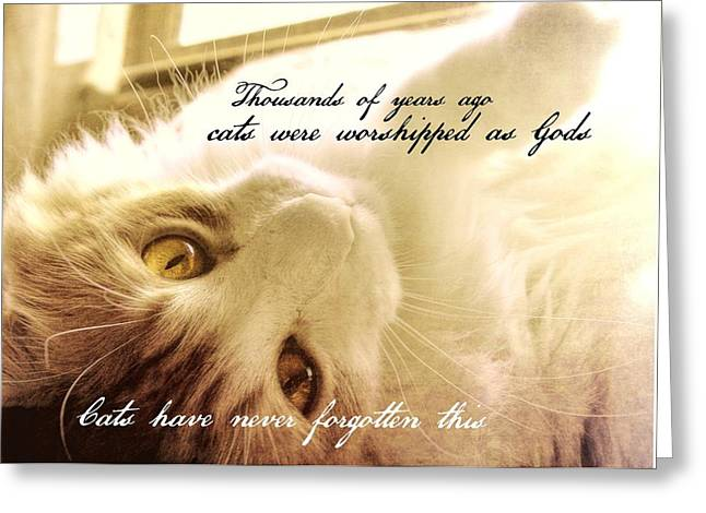 Golden Quote Greeting Card by JAMART Photography