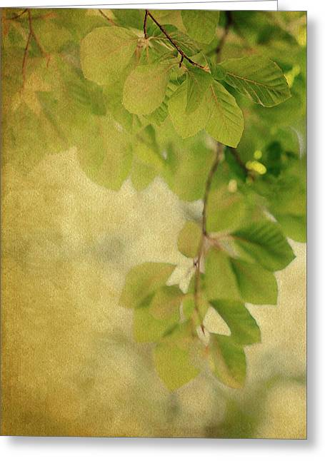 Greeting Card featuring the photograph Golden by Rebecca Cozart