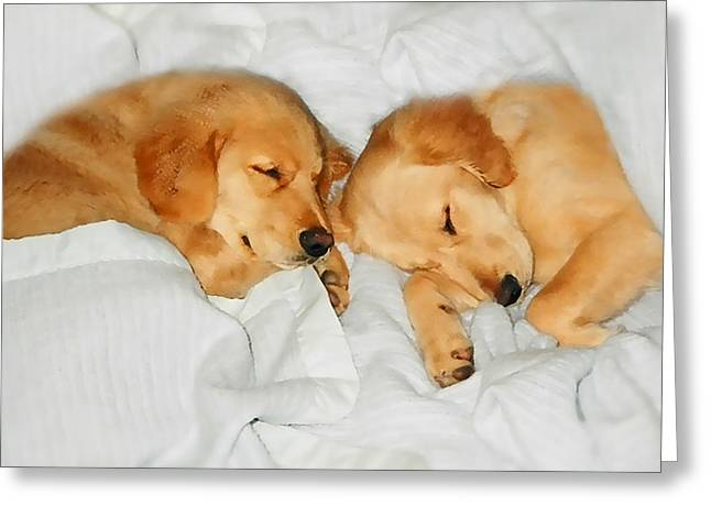 Golden Retriever Dog Puppies Sleeping Greeting Card