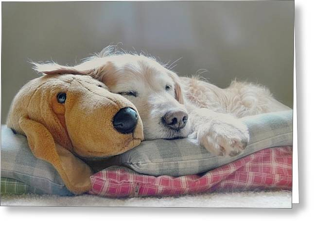 Golden Retriever Dog Sleeping With My Friend Greeting Card