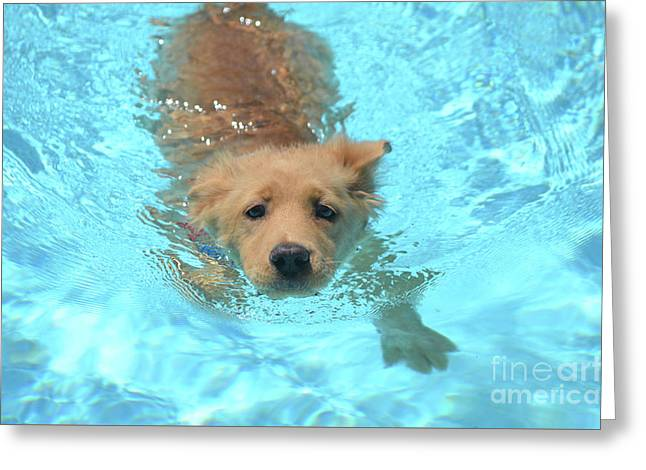 Golden Retriever Olympic Swimmer Greeting Card