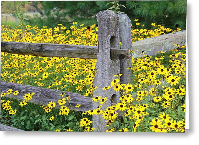 Golden-rod  Crowd Out Greeting Card