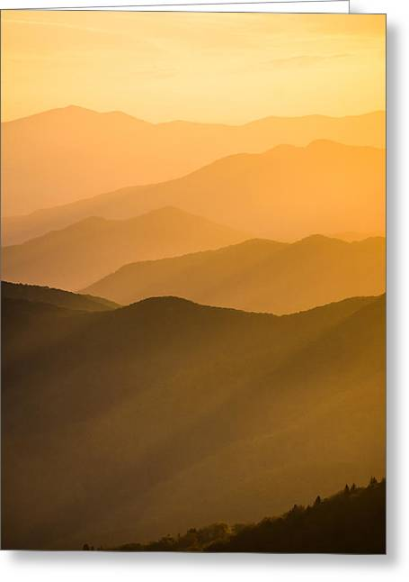 Golden Silhouettes  Greeting Card by Shelby Young