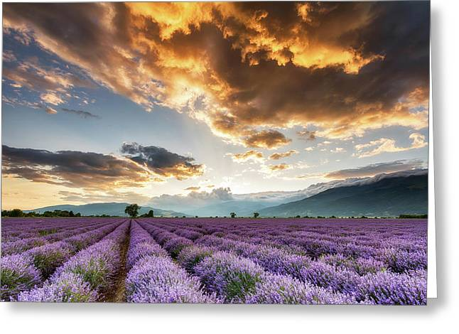 Golden Sky, Violet Earth Greeting Card by Evgeni Dinev
