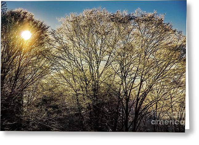 Golden Snow Greeting Card by Tatsuya Atarashi