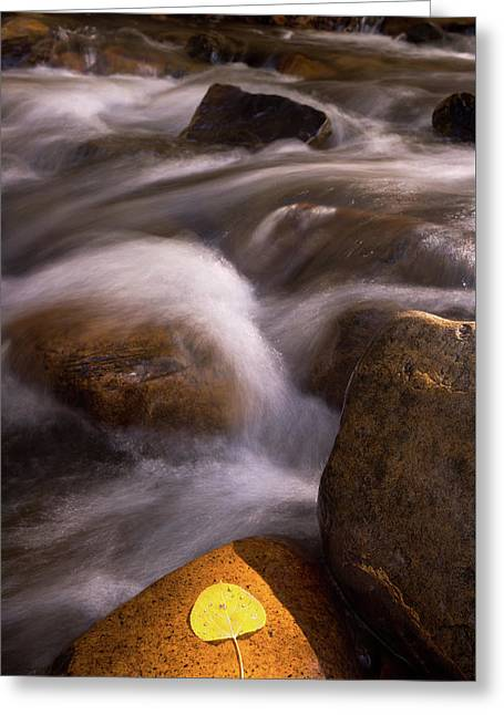 Golden Stream Greeting Card