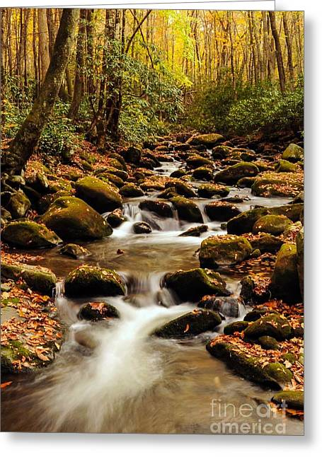 Greeting Card featuring the photograph Golden Stream In The Great Smoky Mountains by Debbie Green