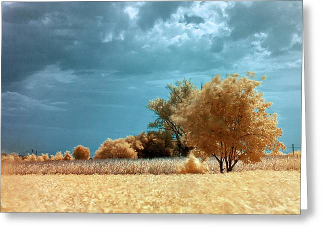 Golden Summerscape Greeting Card